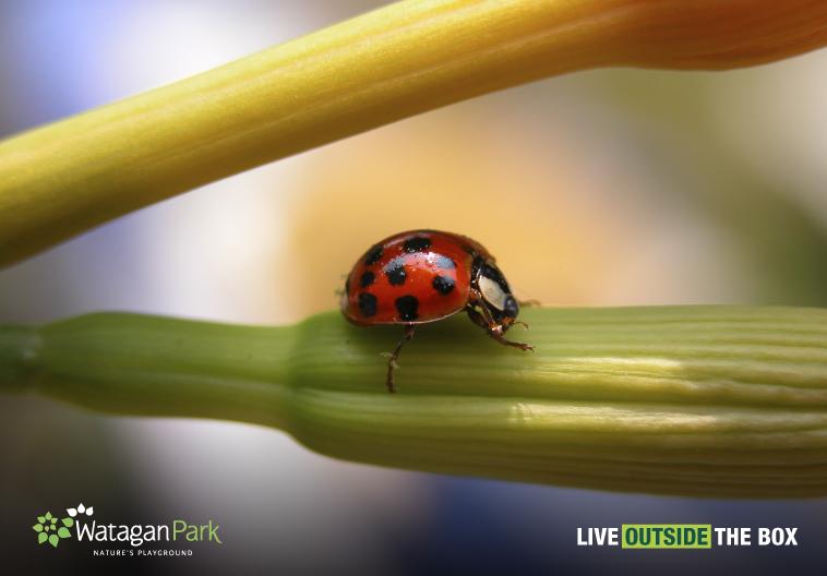 backyard bug hunt blog johnson property group jpg